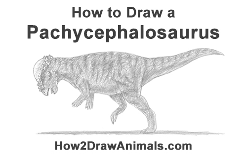 How to Draw a Pachycephalosaurus Growling Dog Drawing