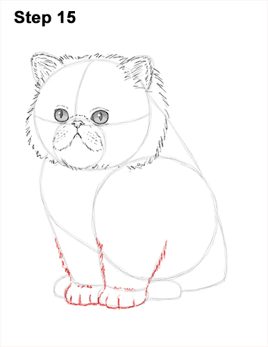 Draw Persian Kitty Cat 15