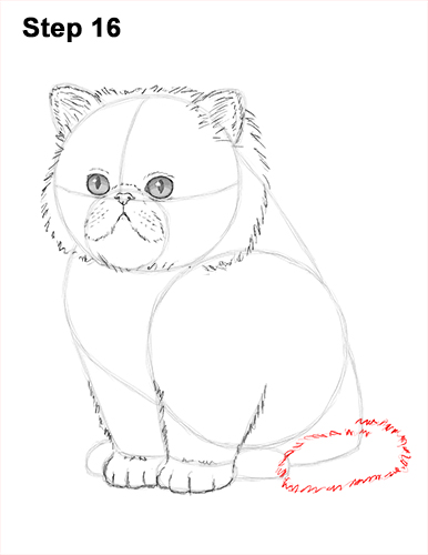 Draw Persian Kitty Cat 16
