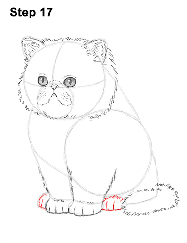 Draw Persian Kitty Cat 17