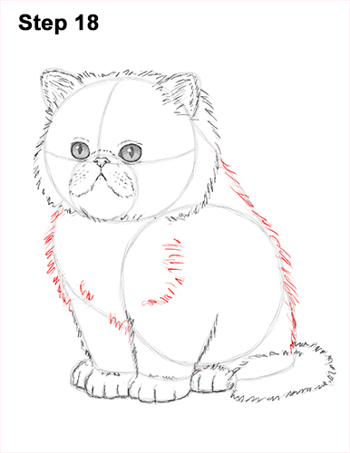 Draw Persian Kitty Cat 18