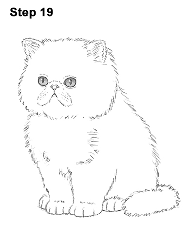 Draw Persian Kitty Cat 19