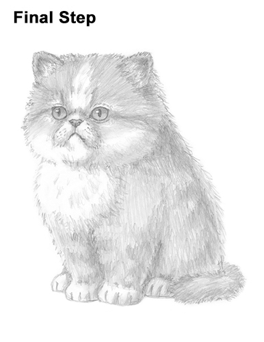 Draw Persian Kitty Cat
