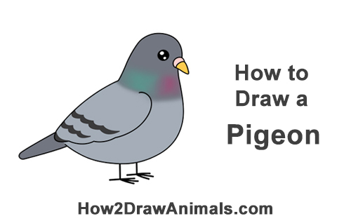 How To Draw A Pigeon Cartoon Video Step By Step Pictures