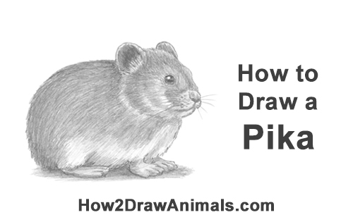 How To Draw A Pika Video Amp Step By Step Pictures