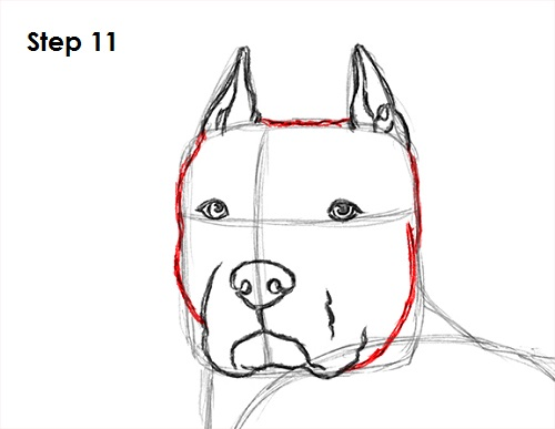 How to draw a dog pit bull draw pit bull 11 ccuart Image collections