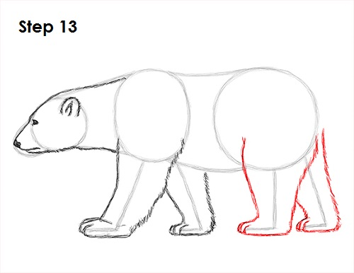 Drawing Lines With Polar Tracking : How to draw a polar bear