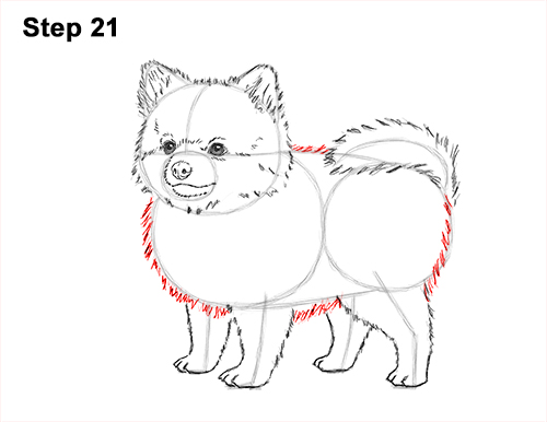 How to Draw a Cute Pomeranian Puppy Dog 21