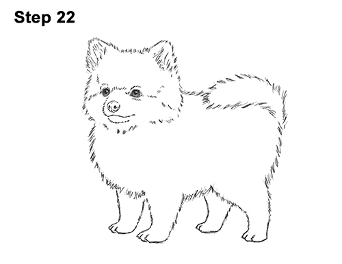 How to Draw a Cute Pomeranian Puppy Dog 22