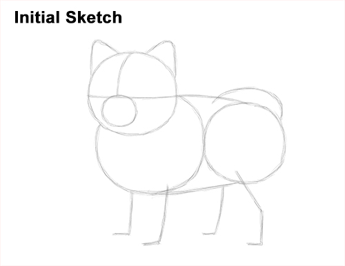 How to Draw a Cute Pomeranian Puppy Dog Initial Sketch