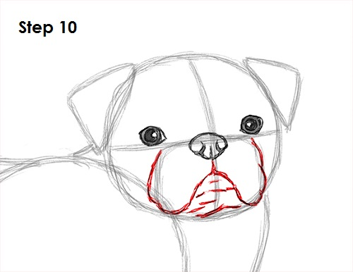 Pug Face Line Drawing : How to draw a dog pug
