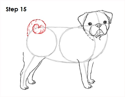 Draw Pug Drawing 15