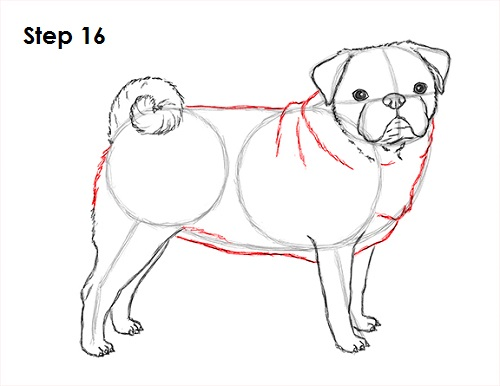 Draw Pug Drawing 16