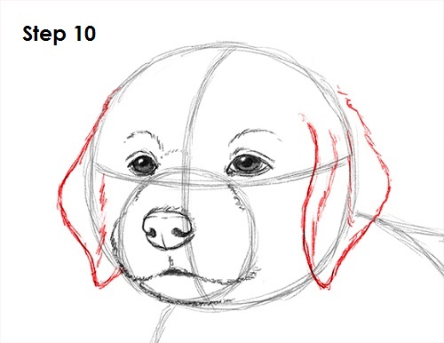Line Drawing Of A Dog S Face : How to draw a puppy