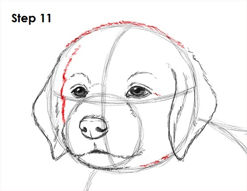 Draw puppy dog 11