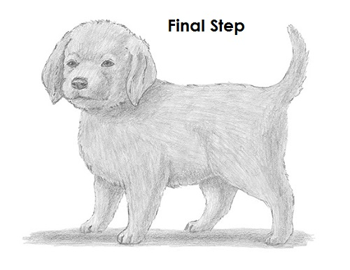 How To Draw A Puppy Video Step By Step Pictures