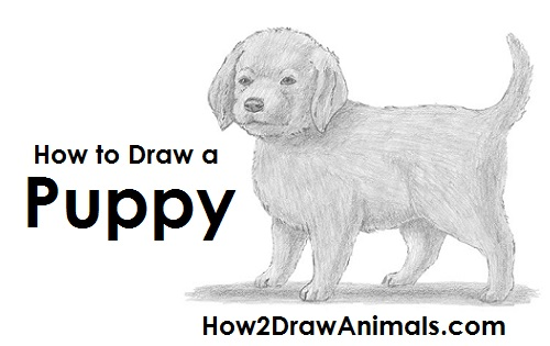 Draw a Puppy Dog