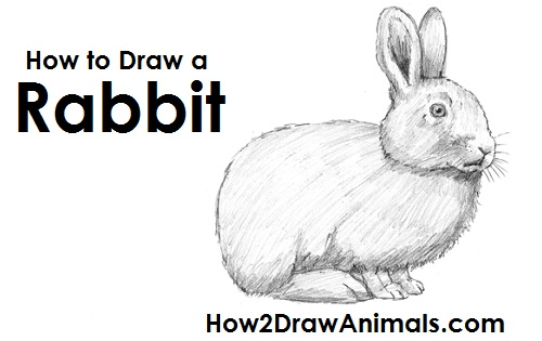 Draw rabbit