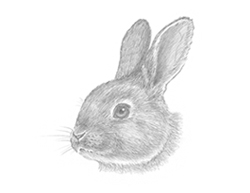 How to Draw a Bunny Rabbit Head Detail