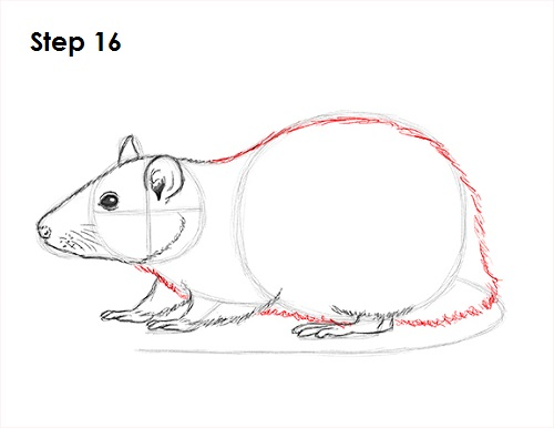 Line Drawing Rat : How to draw a rat