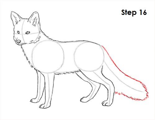 How to draw a fox - photo#6