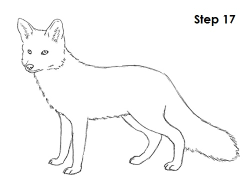 How To Draw A Fox Red Fox