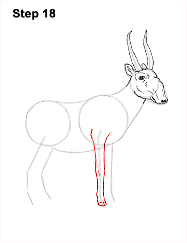How to Draw a Male Saiga Antelope 18