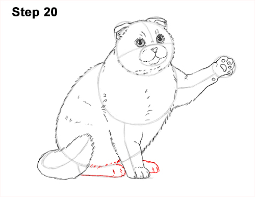 How to Draw a Scottish Fold Cat Playing Pawing Swiping 20