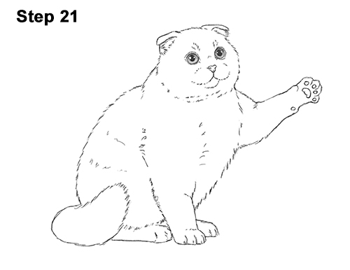 How to Draw a Scottish Fold Cat Playing Pawing Swiping 21