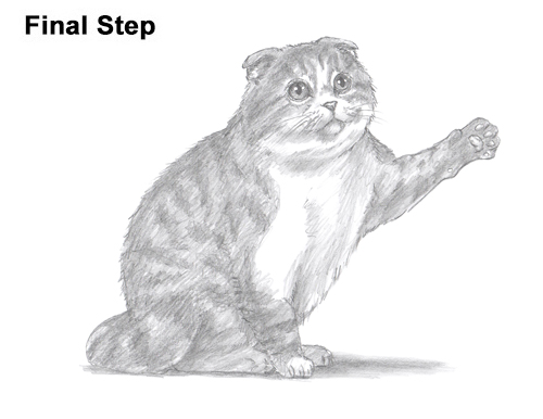 How to Draw a Scottish Fold Cat Playing Pawing Swiping