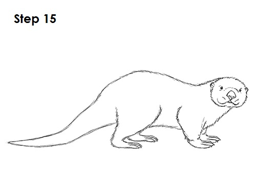 How To Draw An Otter h...
