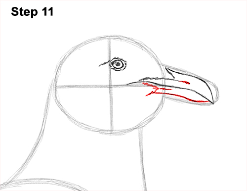 how to draw a seagull gull bird standing 11