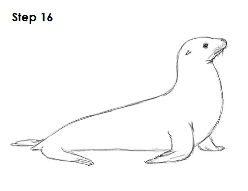 draw seal 16 step