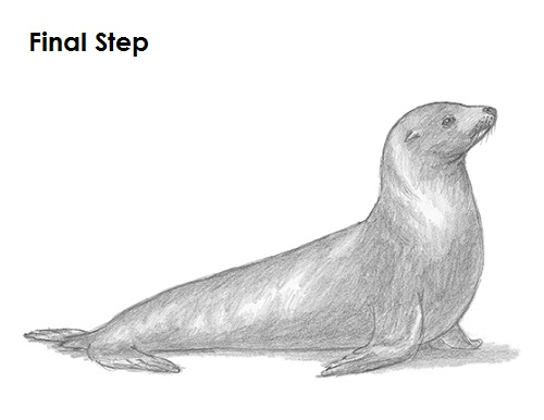 Learn How to Draw a Harbor Seal (Seals) Step by Step : Drawing ...