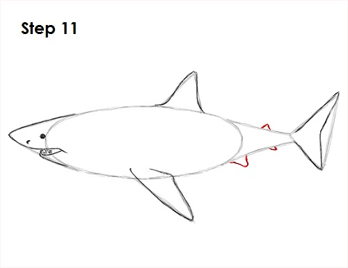 Line Drawing Shark : Great white shark line drawing