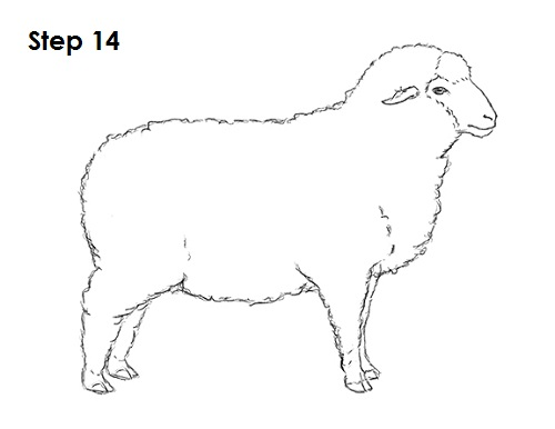 Line Drawing Images Of Sheep : How to draw a sheep