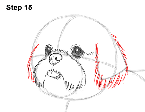 How to Draw a Cute Shih Tzu Puppy Dog 15