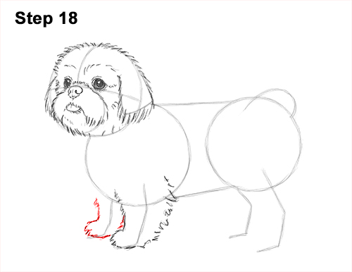 How to Draw a Cute Shih Tzu Puppy Dog 18