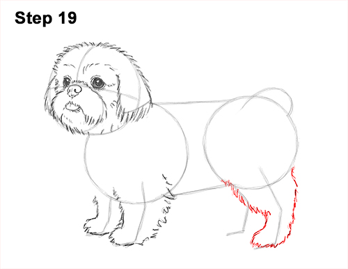 How to Draw a Cute Shih Tzu Puppy Dog 19