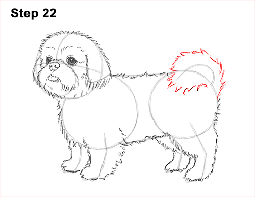 How to Draw a Cute Shih Tzu Puppy Dog 22