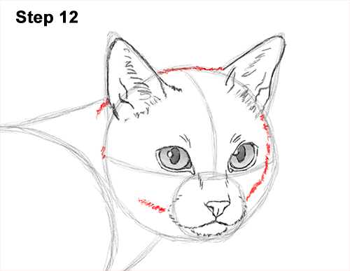 Draw Siamese Cat 12