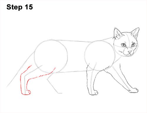 Draw Siamese Cat 15