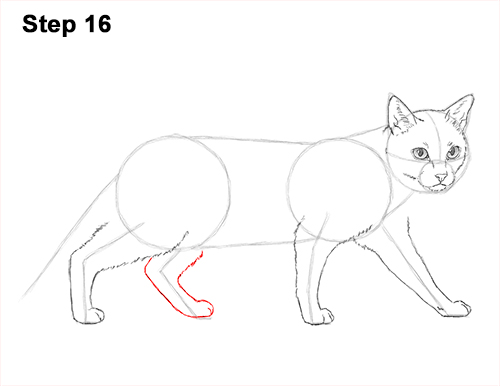 Draw Siamese Cat 16