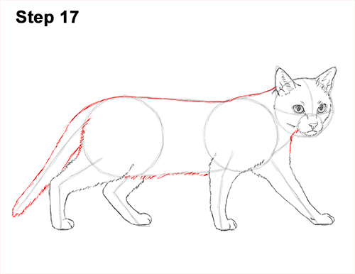 Draw Siamese Cat 17