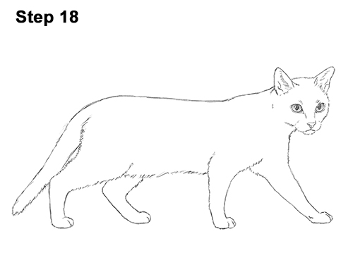 Draw Siamese Cat 18