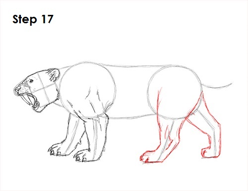 Saber tooth tiger drawing step by step