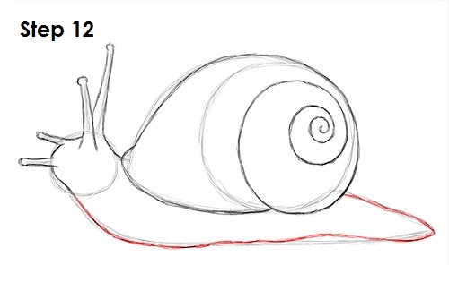image gallery snail drawing