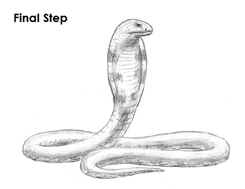 How to Draw a Snake (King Cobra)