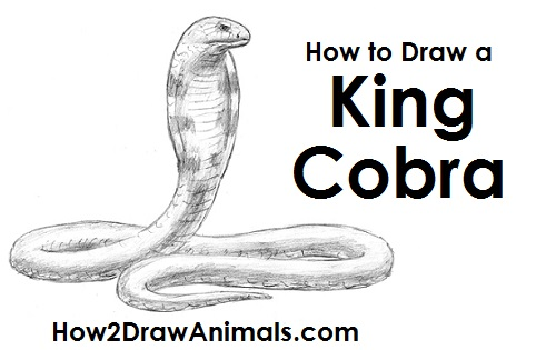 Draw King Cobra Snake