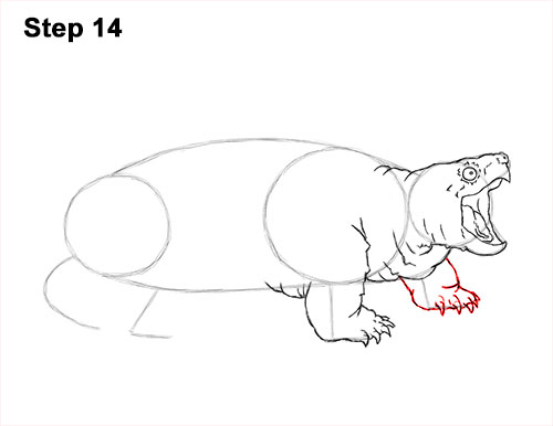 How to Draw Alligator Snapping Turtle Snapper 14